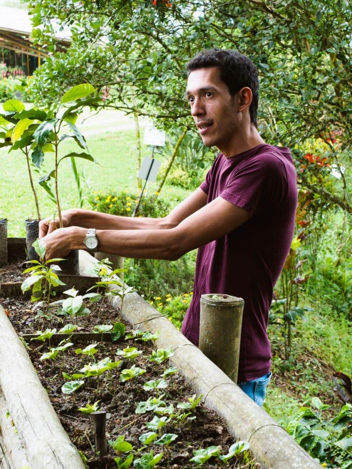 Man holding coffee seedlings