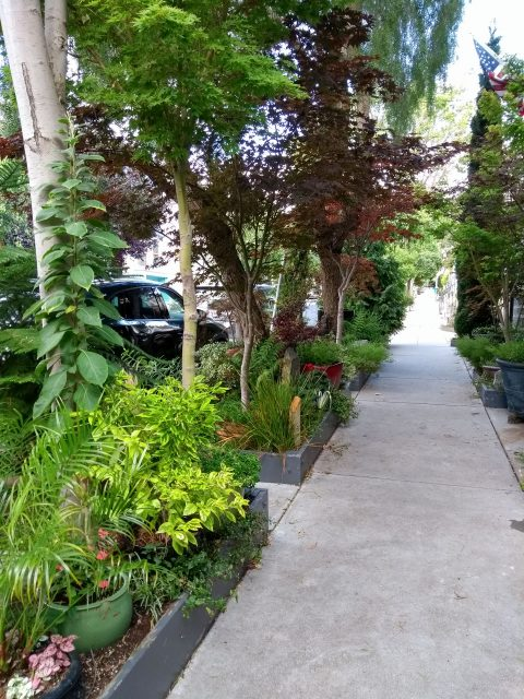 Sidewalk garden with green plants and trees