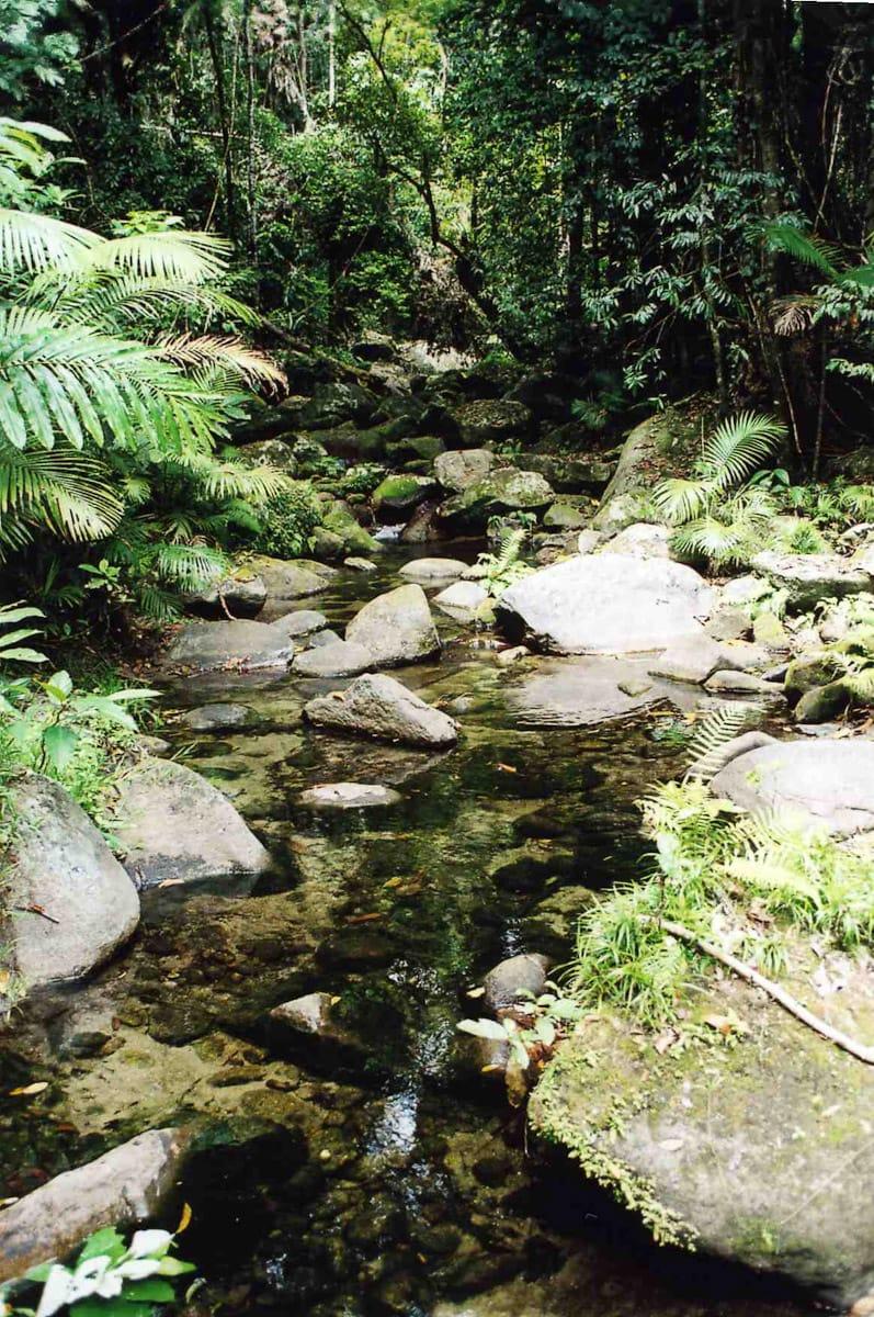 Creek with mossy rocks