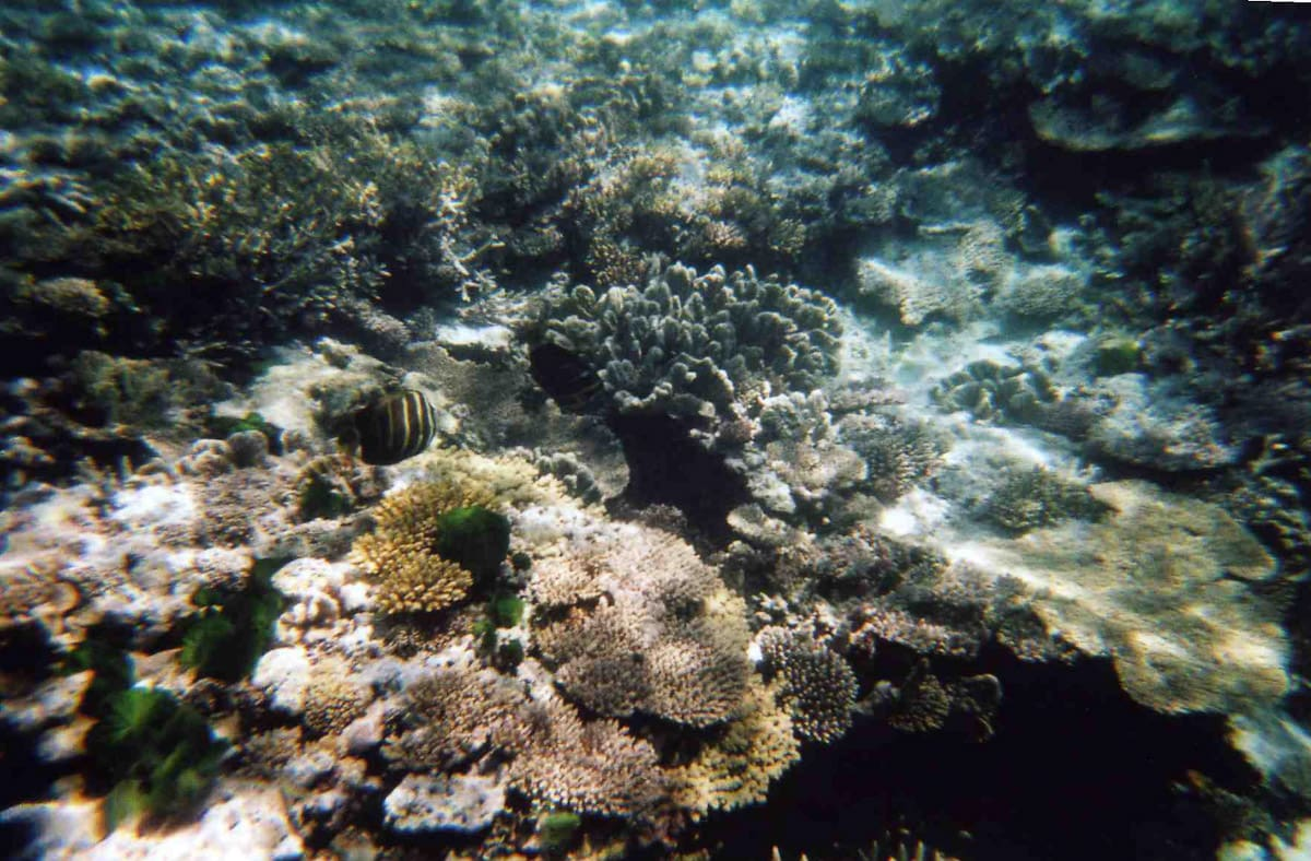 Small fish swimming over reef